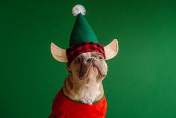 A dog wearing an elf hat.